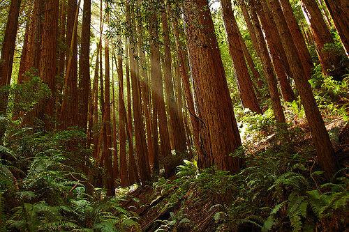 muir-woods12