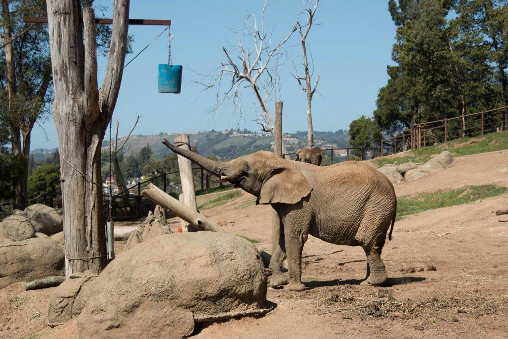 oakland zoo ransage