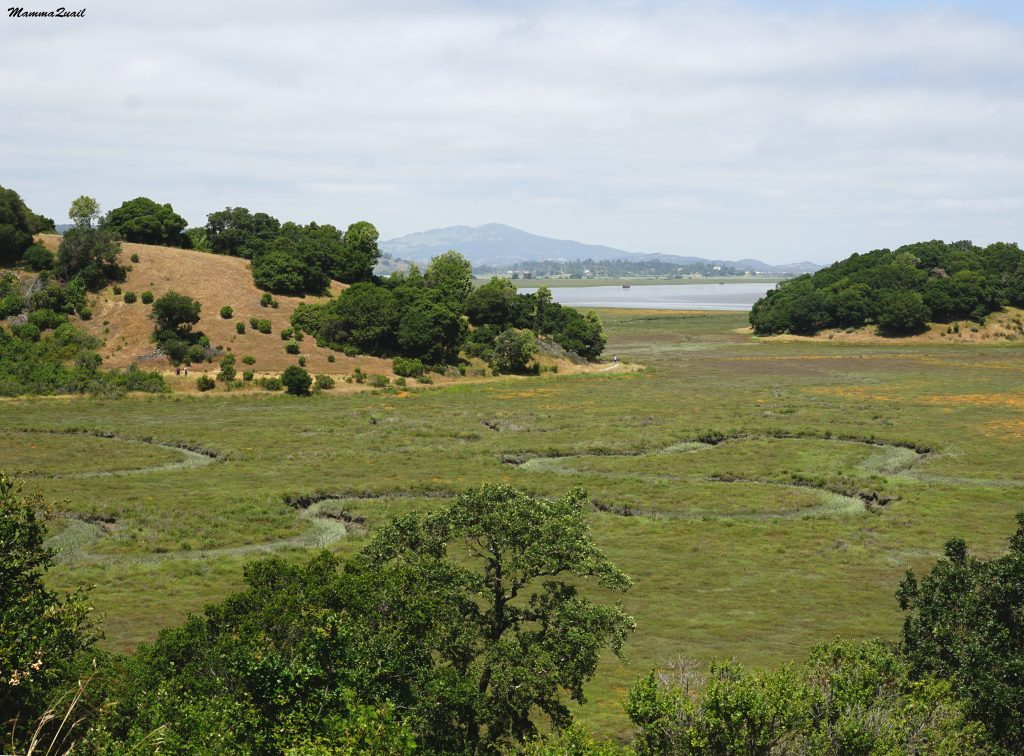 China Camp State Park