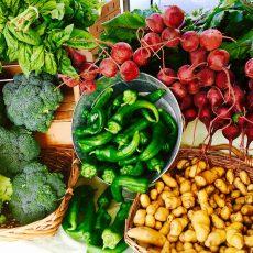 על חיידקים, חצילים ושוקי איכרים