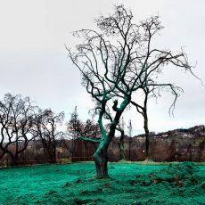 אוקטובר 2018: תערוכות אמנות מומלצות בעמק הסיליקון והסביבה