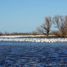 טיול חורפי בשמורת הטבע מרסד (Merced National Wildlife Refuge)