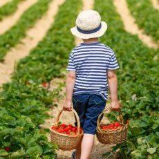 חוות מומלצות לקטיף פירות באיזור העמק