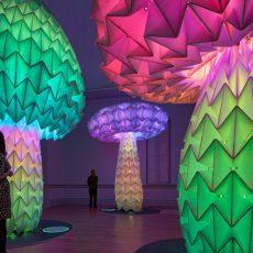 אוקטובר 2019: תערוכות אמנות מומלצות בעמק הסיליקון והסביבה