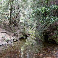 טיול ביער הרדווד The Forest of Nisene Marks