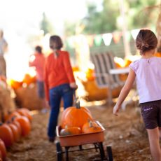 חוות ה-Pumpkin Patch המוצלחות באזור הביי